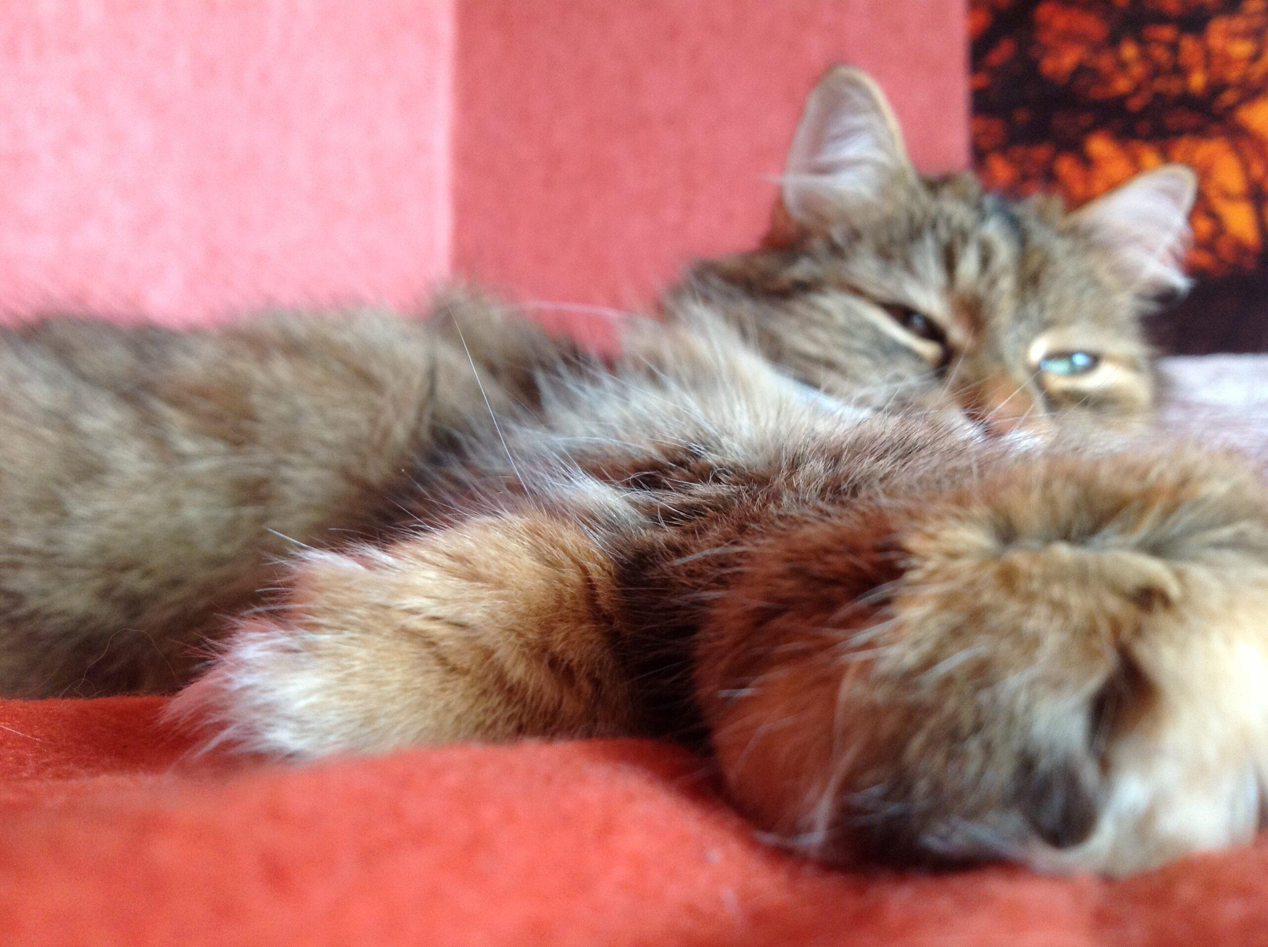 Vše o kočkách a nejen o nich